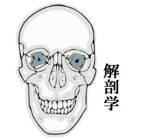 解剖学図.png